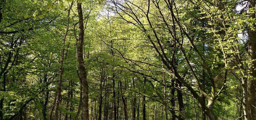 Elmpter Schwalmbruch,  Wald mit Laubbäumen