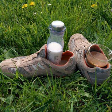 Sonne, Deich & Picknick
