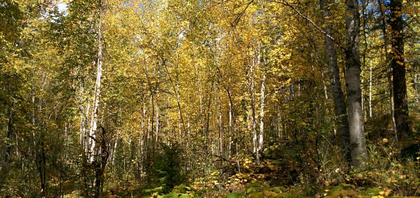 Wells Grey Provincial Park - Moul Fall Trail, Indian Summer