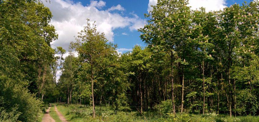 Neuenburger Urwald - Waldlichtung