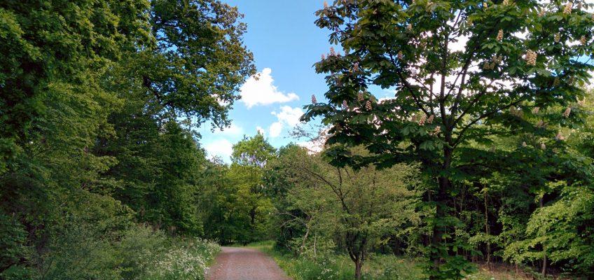 Neuenburger Urwald